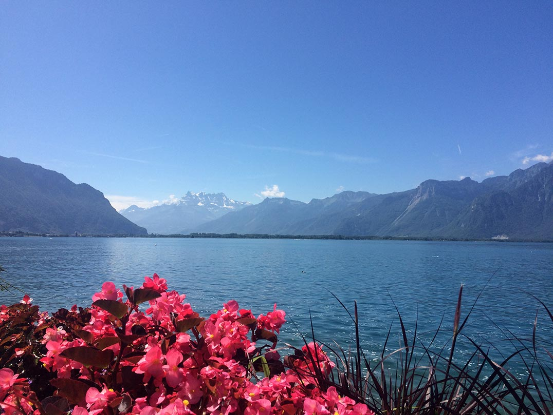 The banks of Lake Geneva. In the forefront there are pink flowers and in the background there are snowy mountains.